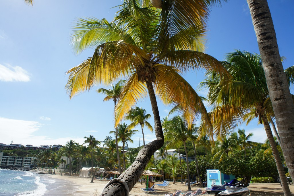 Sunshine and palm trees on Bolongo Bay