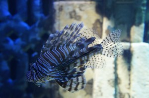Beautiful fish at Atlantis Bahamas