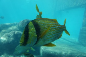 Beautiful fish at Atlantis Bahamas