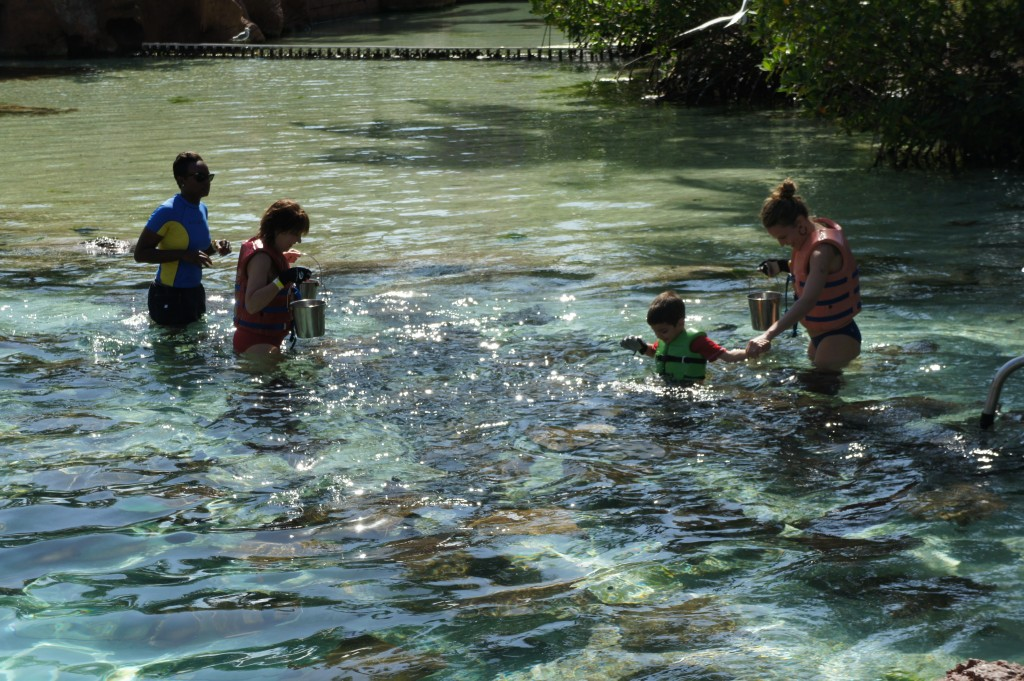 Stingray feeding at Atlantis Bahamas
