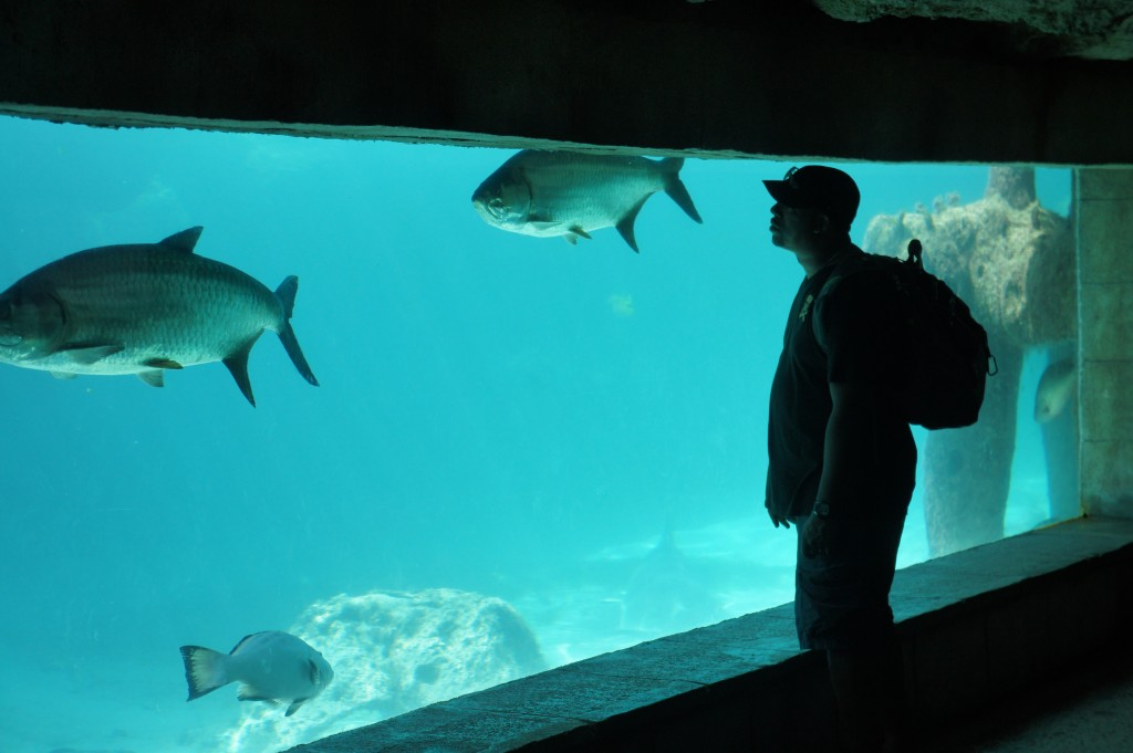 Mango Eddie admiring the fish at Atlantis Bahamas