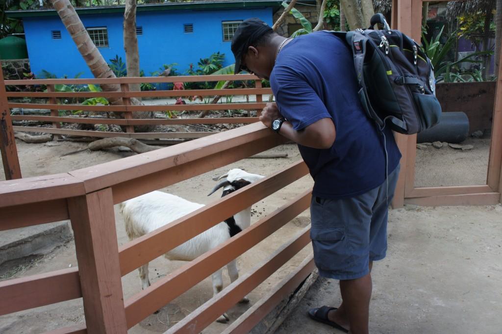 Mango Eddie and Billy Goat at Ardastra Gardens in Nassau, Bahamas
