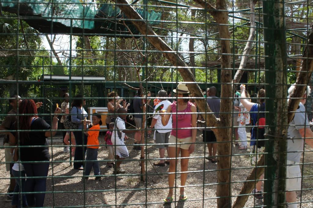 Lorikeet feeding at Ardastra Gardens & Zoo in Nassau, Bahamas