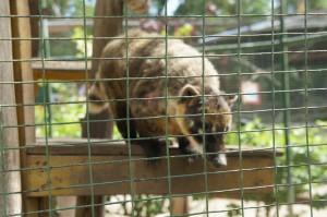 Ardastra Gardens & Zoo in Nassau, Bahamas