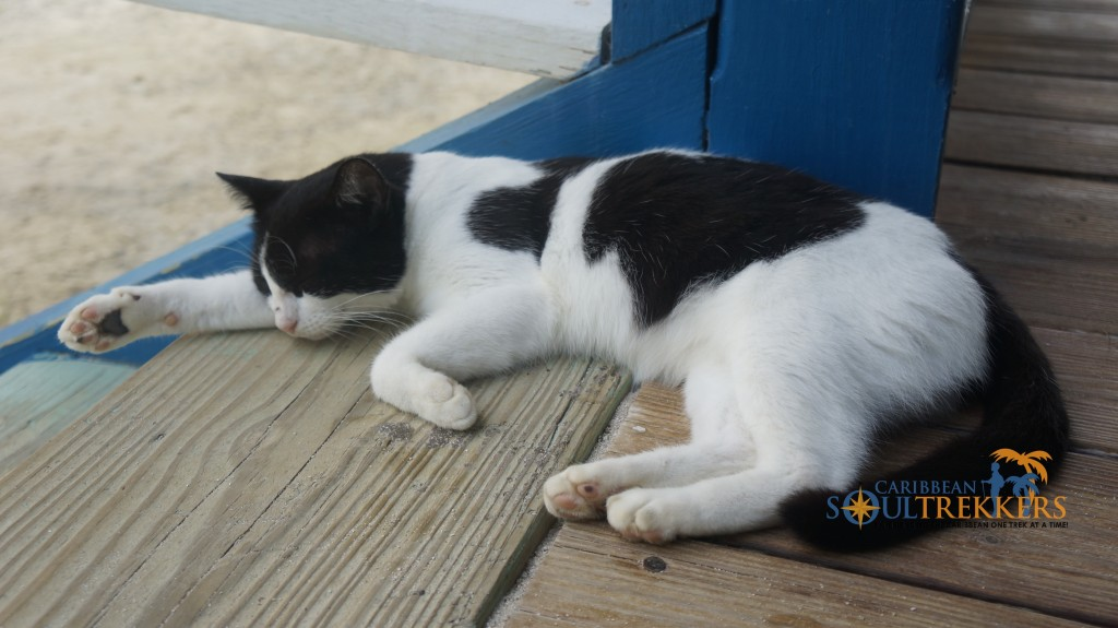 Sleeping Kitty at Foxy's Taboo in Jost Van Dyke